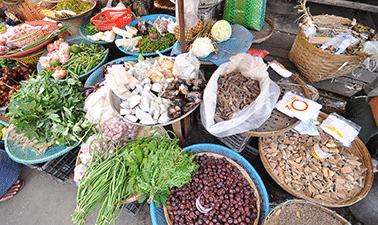 การอนุรักษ์ความหลากหลายและการใช้ประโยชน์อย่างยั่งยืนของพรรณพืชป่าพื้นเมืองของไทย | The conservation and sustainable use of native Thai plants