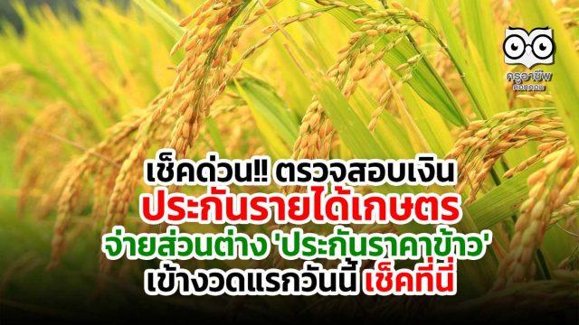 เช็คด่วน!! ตรวจสอบเงินประกันรายได้เกษตร จ่ายส่วนต่าง 'ประกันราคาข้าว' งวดแรกวันนี้ เช็คที่นี่
