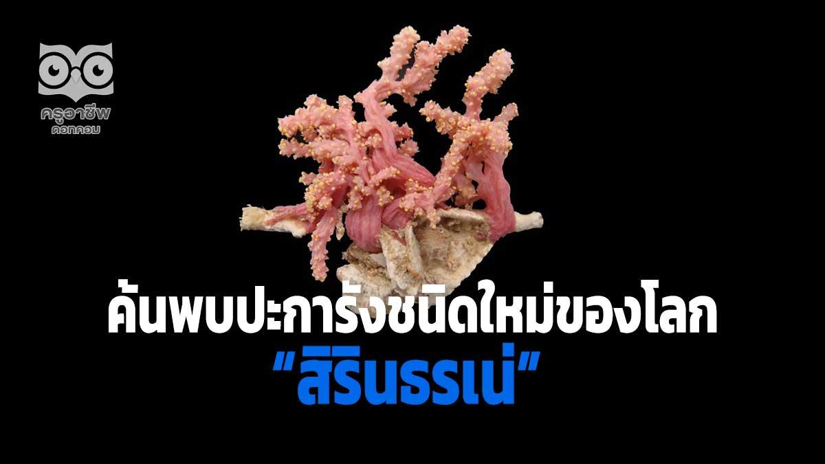 """ค้นพบปะการังชนิดใหม่ของโลก ในน่านน้ำไทย พระราชทานนาม """"สิรินธรเน่"""""""