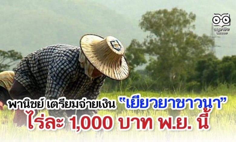 พานิชย์ เตรียมจ่ายเงินเยียวยาชาวนา ไร่ละ 1000 บาท พ.ย. นี้ พร้อมโครงการประกันรายได้ช่วยชาวนาต่อเนื่อง